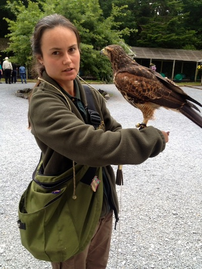 Inca with handler Anya at the Irish School of Falconry, Ashford Castle