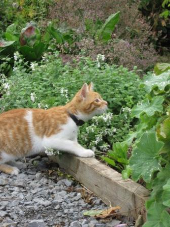 A curious kitten at Woodville Walled Garden