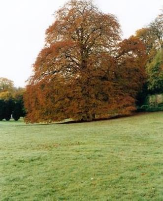The Autograph Tree in Coole Park, County Galway