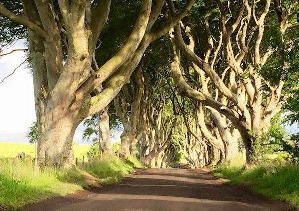 Glen of the Hedges or the Dark Hedges, film location Game of Thrones, Northern Ireland.